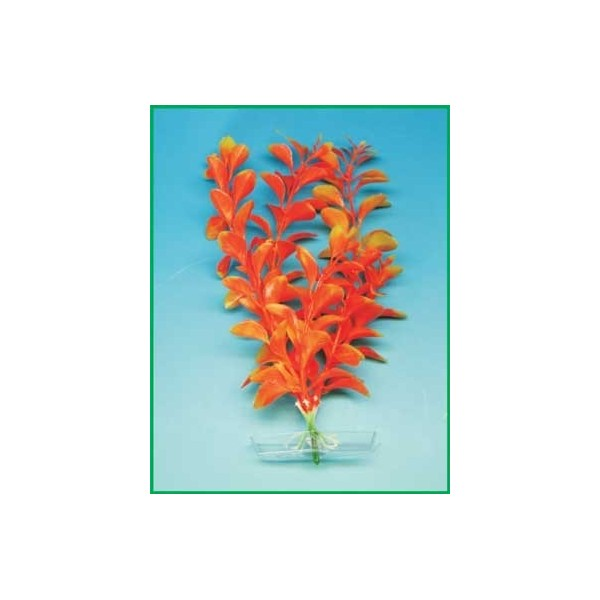 Orange Ludwigia        25-28cm