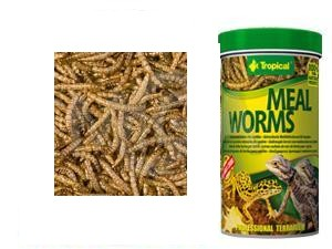 Tropical Meal Worms 250ml