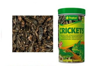Tropical Crickets 100ml